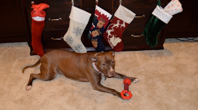 Opening her first stocking gift, from her family in VA ! This may have been her favorite.