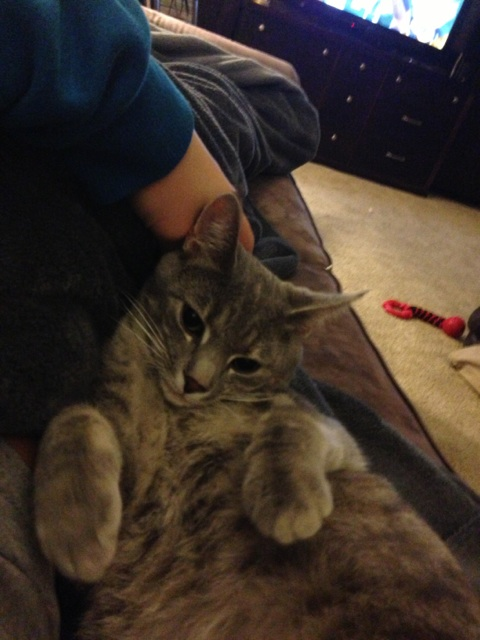 Even the kitty cat Bella gets in on the snuggle-bug action