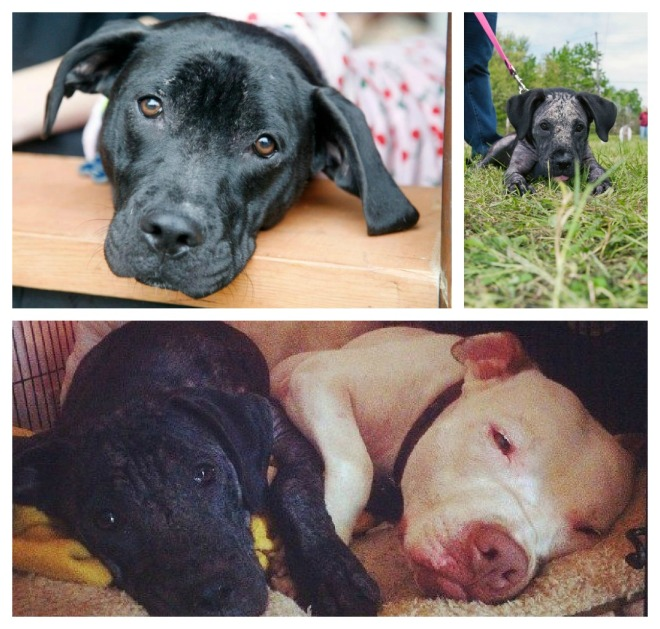 Upper RH corner is Jora when first brought into LCPO! Look what a cuddle-bug she is, and how far she has come.