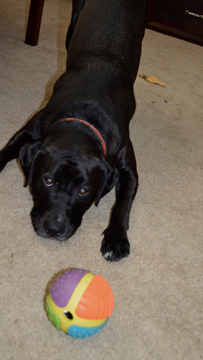 Even a game of fetch should have fun rules... consider them bargaining points!