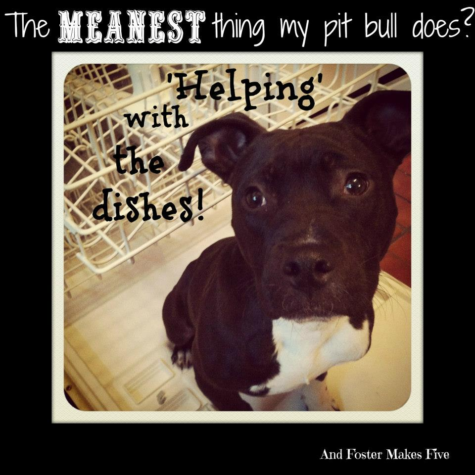 Pitbull Dog Quotes Pit Bull  And Foster Makes Five