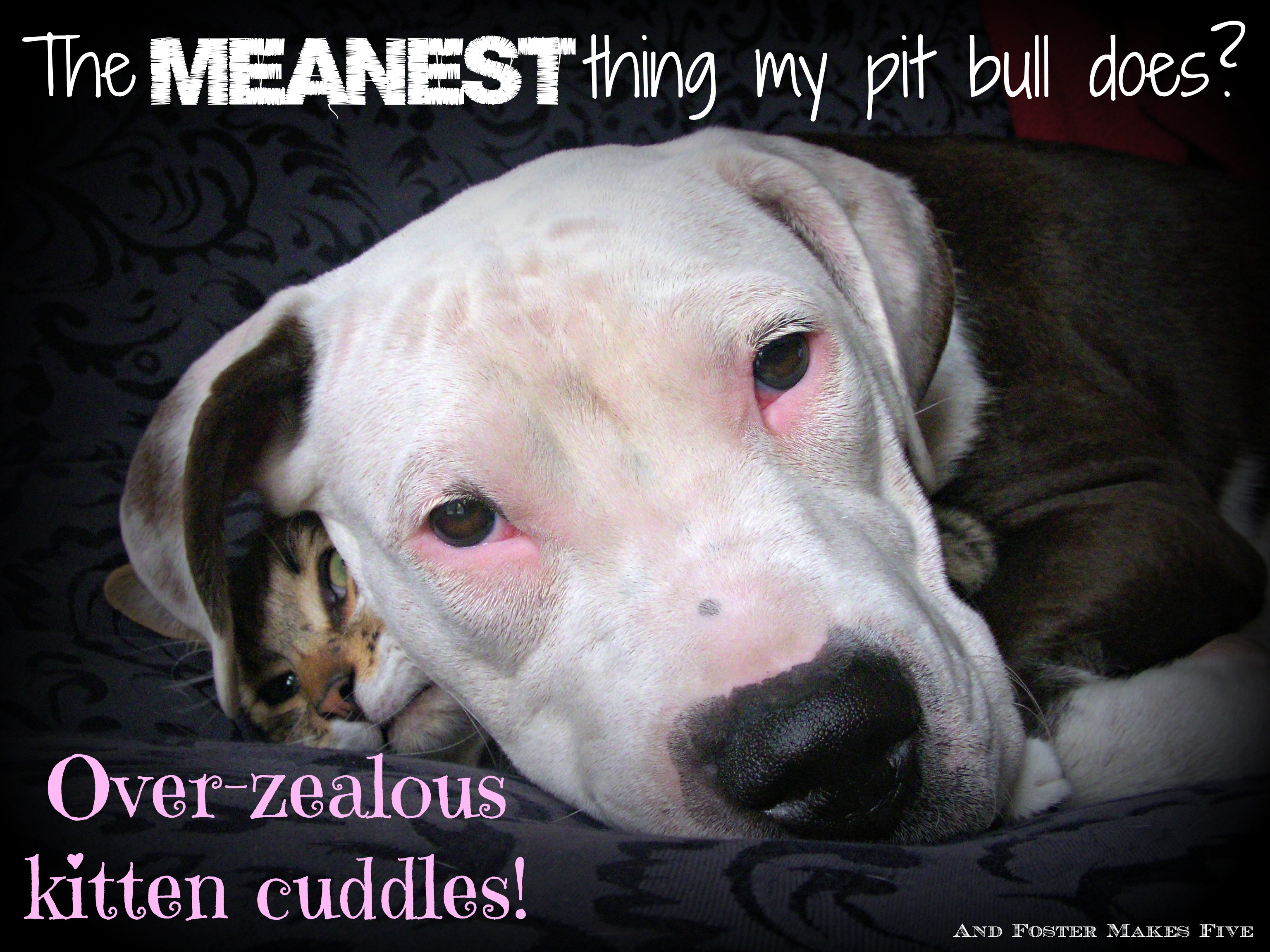 Pitbull Dog Quotes Stereotypes  And Foster Makes Five