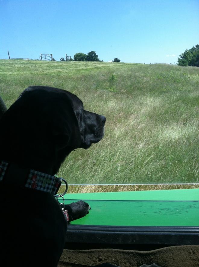 Farmer's Daughter? Mowing pastures in the John Deere